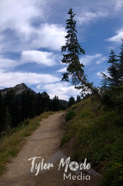 288  G Naches Peak Loop Trail and Tree V