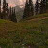 137  G Smoky Rainier and Alpine Asters V