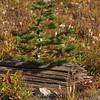 1429  G Tree and Log