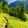 117  G Trail Back V