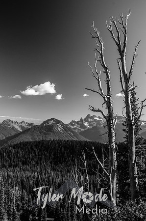 199  G Trees and Cloud BW V
