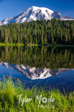 351  G Rainier Reflections Lake Deer V