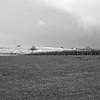 Rainton Meadows in January
