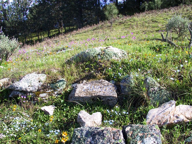 annies's rocks