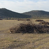 Stacks of brush and blades of grass are all that remain of what used to be rangeland filled with invasive brush.