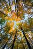 fall foliage_feye_0721