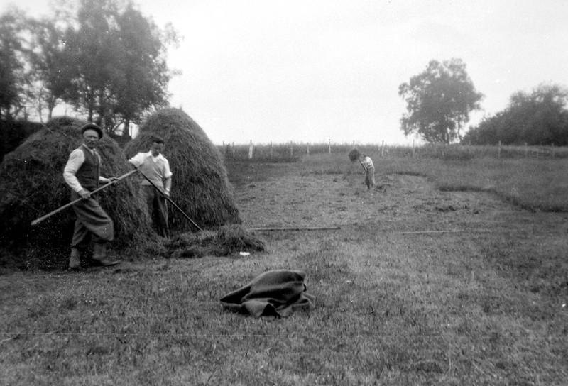 Haymaking, 1930s?