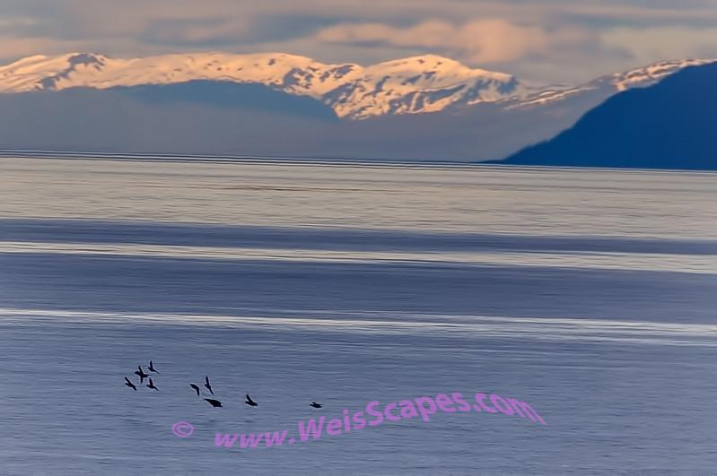 Seagulls at dusk.