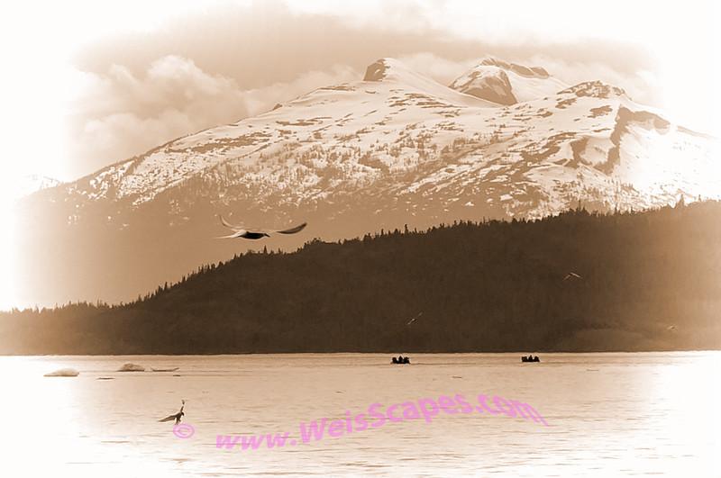 Skiffs leaving glacier in Thomas Bay.