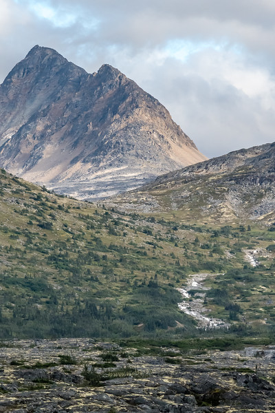 Tundra on the Klondike Highway north of Skagway in the White Pass area.