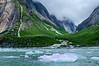 Vegetation get's a foothold after retreating glacier, Endicott Arm area.