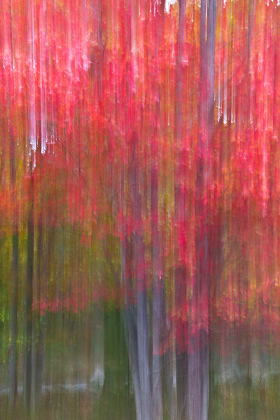 Impressionistic rendition of autumn foliage