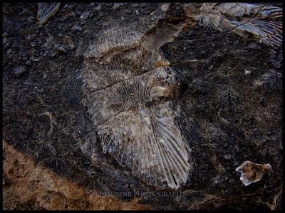 Fossil are easily found around Las Vegas.