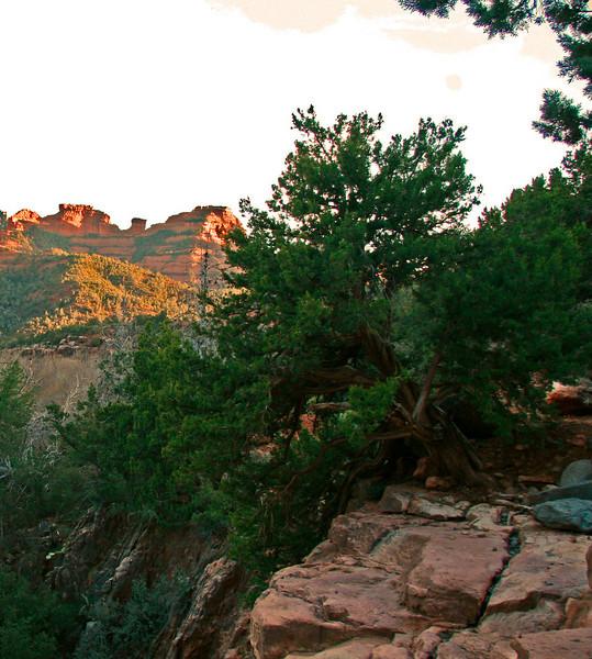 Cliffside Ceader