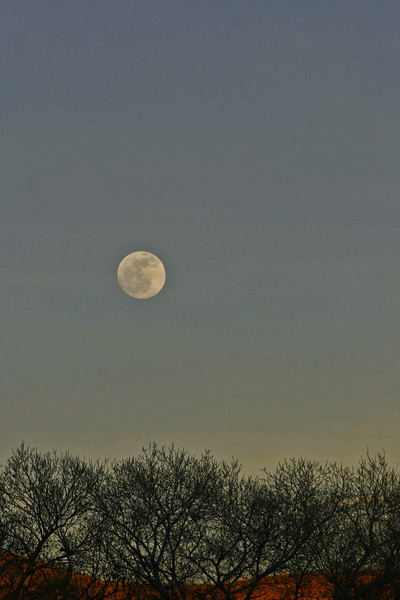 Moon Rise over cottonwoods