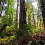 20080413-Redwoods_D3X2348