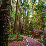 Path Along the Redwoods, Redwood National Park. Prairie Creek