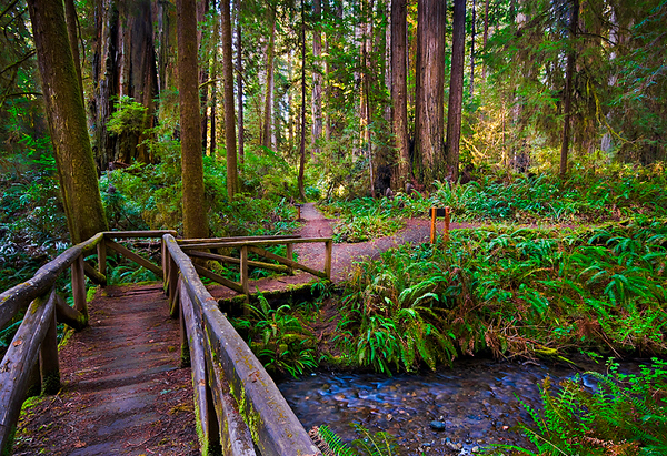 """Path to Redwoods"" Prairie Creek Redwood National Park. I stumbled upon this bridge in the Prairie Creek portion of Redwood National Park (I crept out while visiting the inlaws!). I had hoped to get out and take pictures before the fog broke, but the sun started beaming through the redwoods in the background. I was able to tame the light and capture this image. I love the feeling you get just walking across the bridge and the choices of the two paths to take. I am inspired to capture those places I want to be on a Friday afternoon."