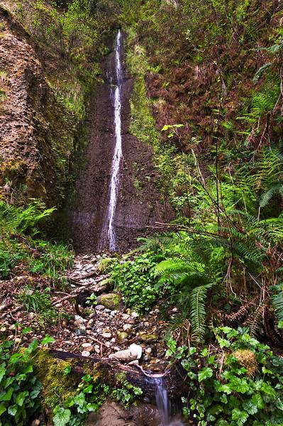 Gold Dust Falls #2 Prairie Creek Redwood National Park web