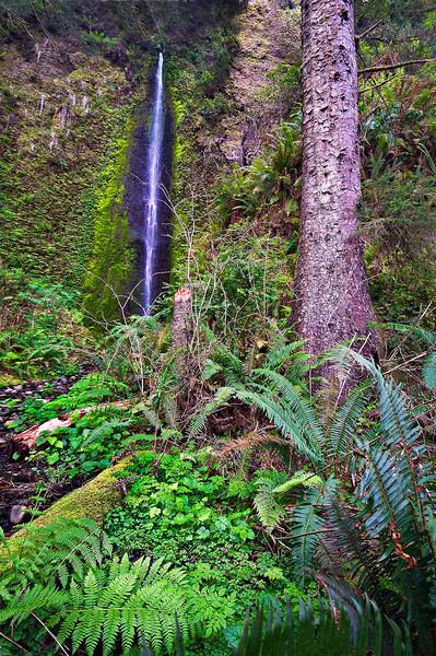 Gold Dust Falls Prarie Creek Redwood National Park web