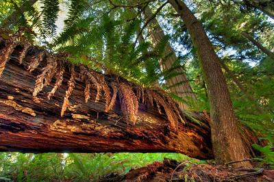 Forest & Fern Beauty