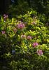 redwoods-lady bird johnson-4056