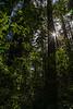 redwoods-3957