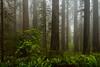 redwoods-damnation ck-4114
