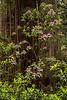 redwoods-jedediahsmith-4290