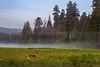 redwoods-prairie ck-3943
