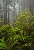 redwoods-damnation ck-4105