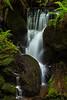 redwoods-trillium-4074