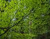 redwoods-stout-4301