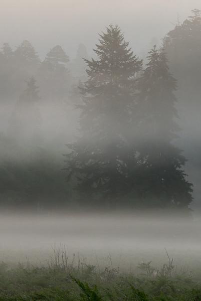 redwoods-3919