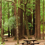 Camping in Memorial Park - Memorial Park, San Mateo County near Pescadero and Butano State Park, California