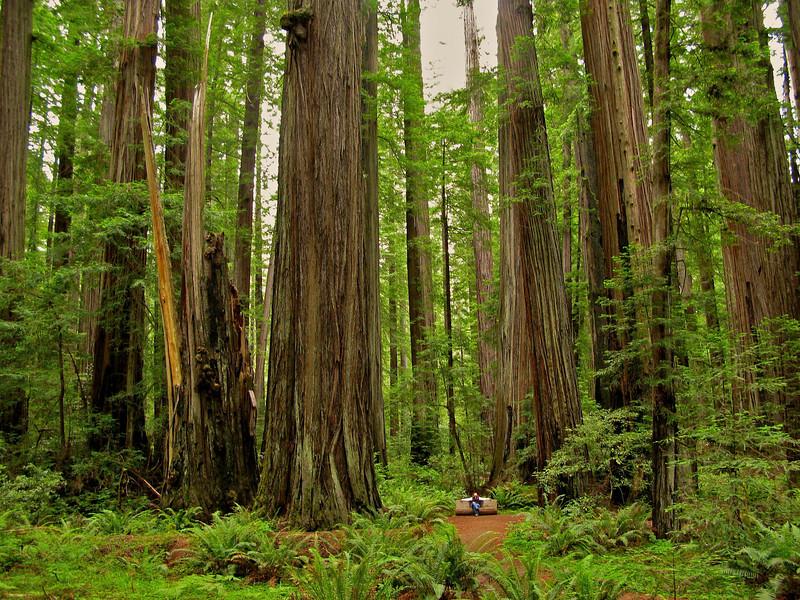 Humboldt Redwoods State Park, CA.