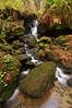 Trillium Falls, Redwood National Park, CA.