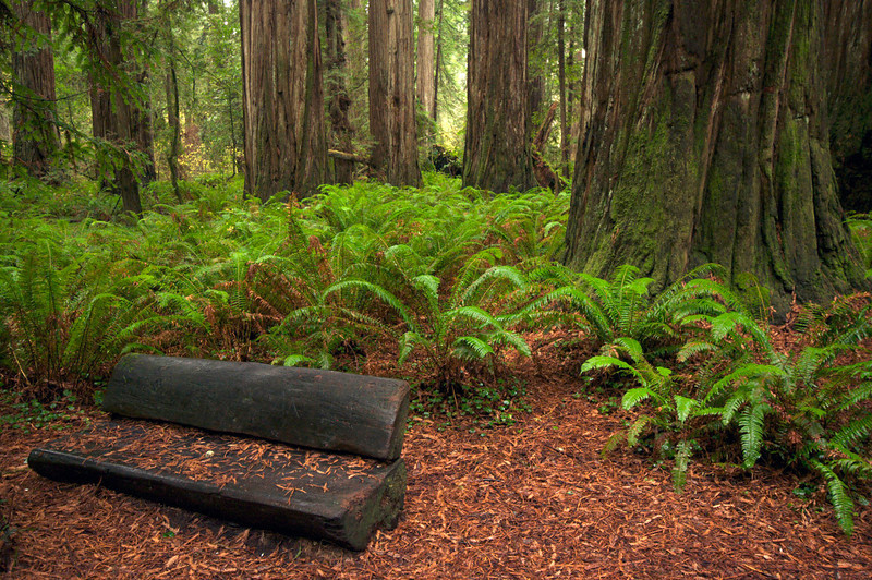 Stout Grove, Jedediah Smith Redwoods State Park, CA.