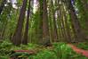 Humboldt Redwoods State Park, CA