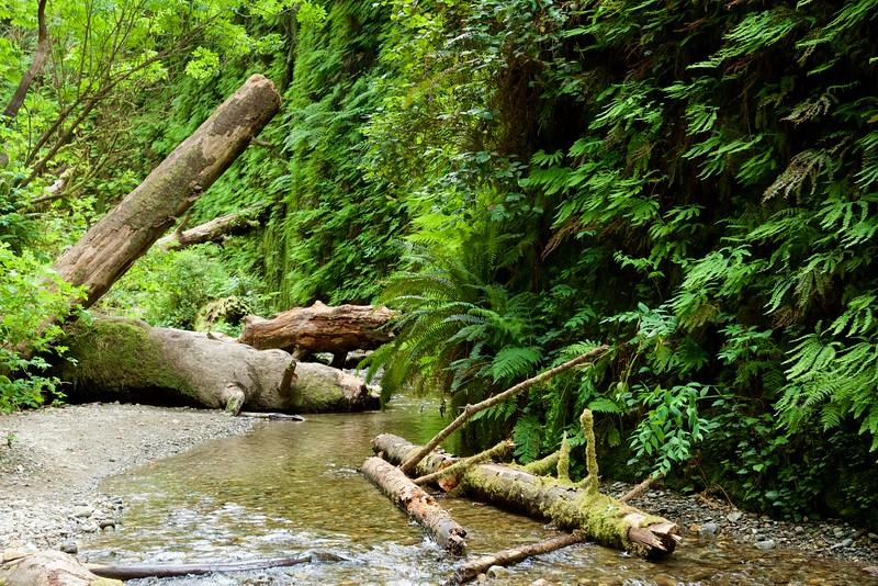 Fern Canyon, Prairie Creek Redwoods State Park, Humboldt Co., CA