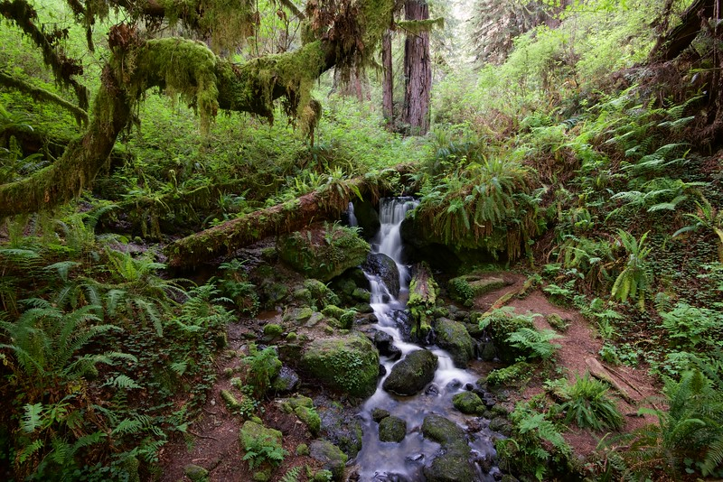 Trillium Falls, Redwood National Park