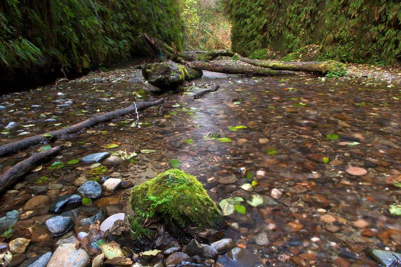 Fern Valley, Prairie Creek Redwoods State Park, CA.
