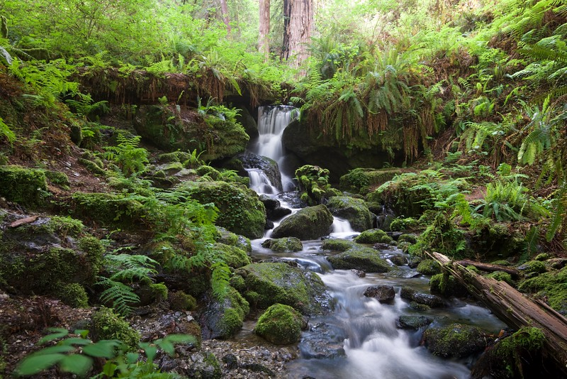 Trillium Falls, Redwood National Park