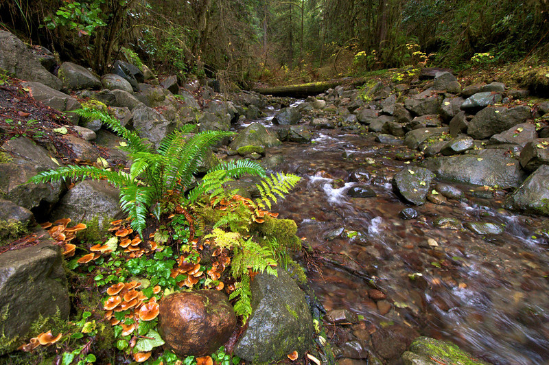 Near Stout Grove, Jedediah Smith Redwoods State Park, CA.