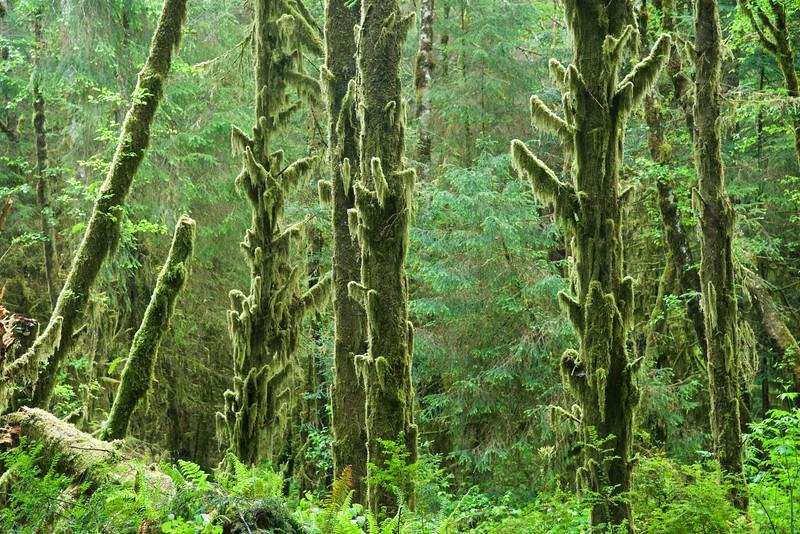 Prairie Creek Redwoods State Park, Humboldt Co., CA