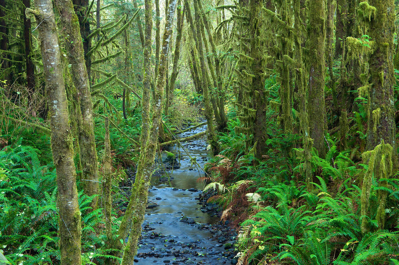 Lost Man Creek, Redwood National Park, CA.