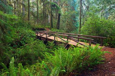 Redwoods and California Coast