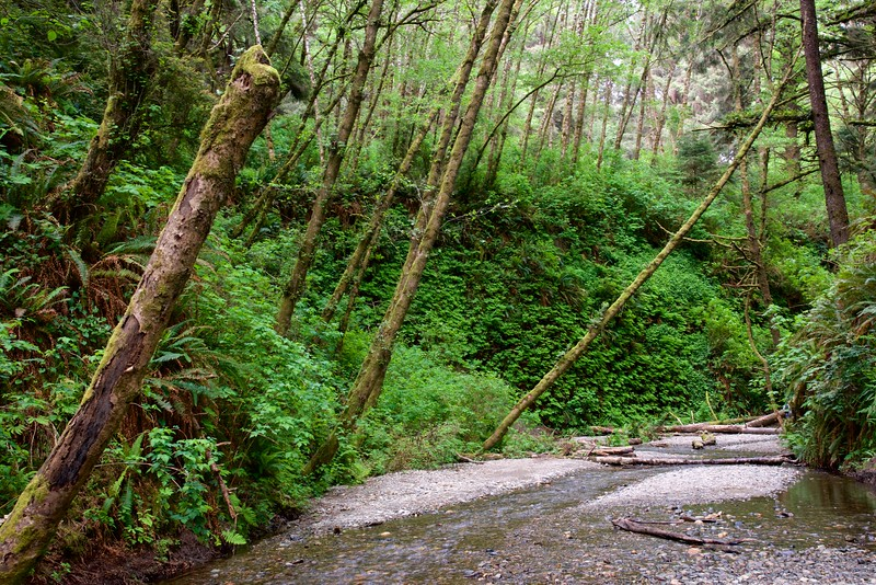 Fern Canyon, Prairie Creek Redwoods State Park, Humboldt Co., CA
