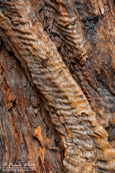 Redwood bark detail #3