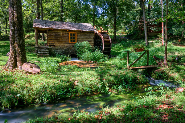 Reed Springs